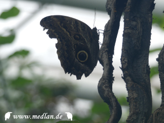 Zoo / Schmetterling